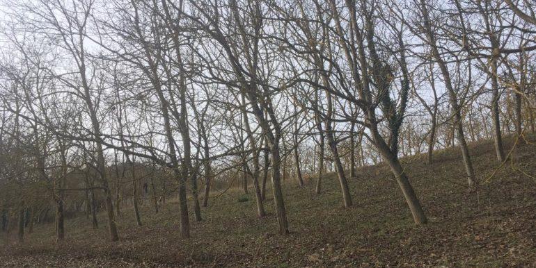 Terreno agricolo a 1,2 km da Modigliana